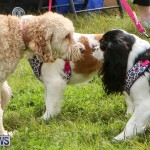 SPCA Paws To The Park Bermuda, March 1 2015-40