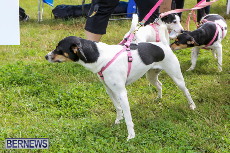 SPCA-Paws-To-The-Park-Bermuda-March-1-2015-41