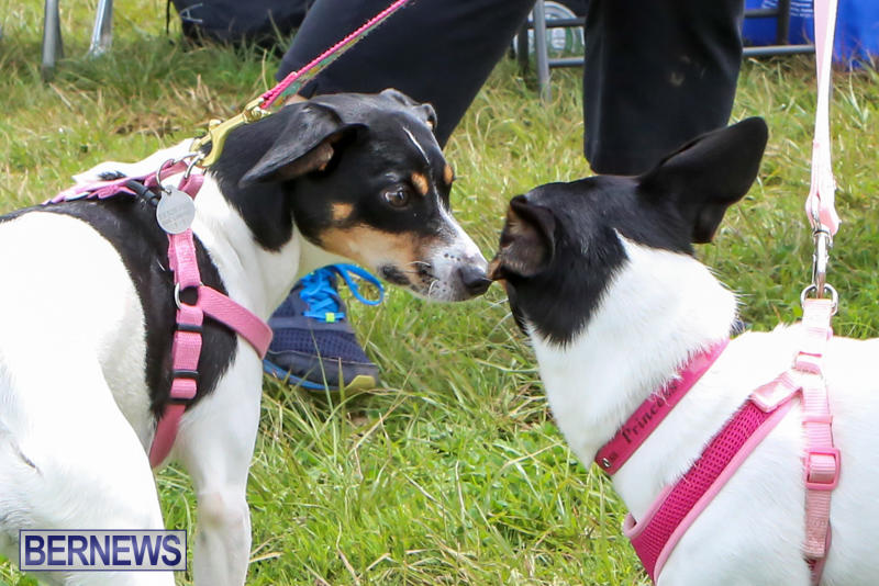 SPCA-Paws-To-The-Park-Bermuda-March-1-2015-42