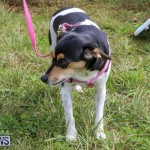 SPCA Paws To The Park Bermuda, March 1 2015-43