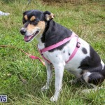 SPCA Paws To The Park Bermuda, March 1 2015-44