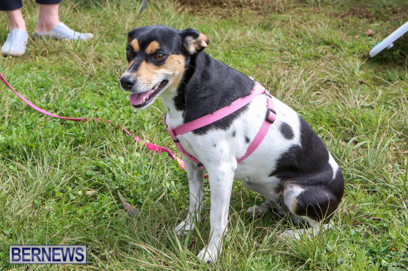 SPCA-Paws-To-The-Park-Bermuda-March-1-2015-44