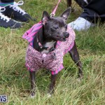 SPCA Paws To The Park Bermuda, March 1 2015-46