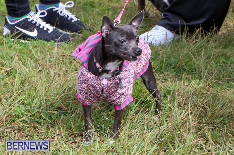 SPCA-Paws-To-The-Park-Bermuda-March-1-2015-46