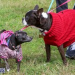SPCA Paws To The Park Bermuda, March 1 2015-48