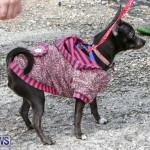 SPCA Paws To The Park Bermuda, March 1 2015-5