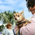 SPCA Paws To The Park Bermuda, March 1 2015-58