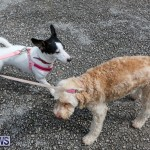 SPCA Paws To The Park Bermuda, March 1 2015-6