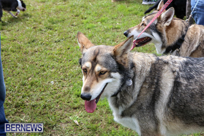 SPCA-Paws-To-The-Park-Bermuda-March-1-2015-60