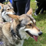 SPCA Paws To The Park Bermuda, March 1 2015-63