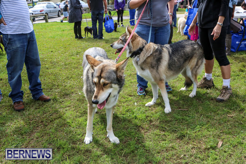 SPCA-Paws-To-The-Park-Bermuda-March-1-2015-64
