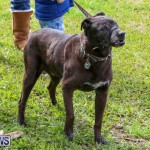 SPCA Paws To The Park Bermuda, March 1 2015-65