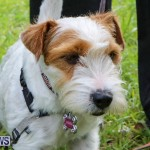 SPCA Paws To The Park Bermuda, March 1 2015-68