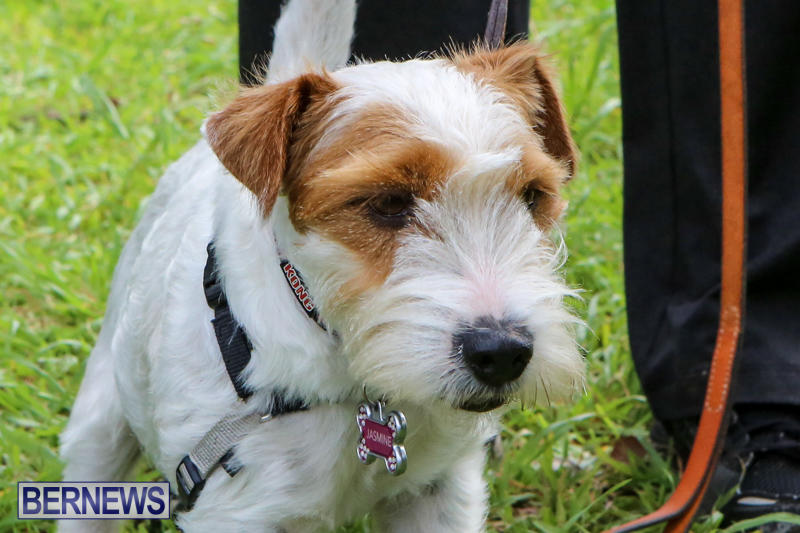 SPCA-Paws-To-The-Park-Bermuda-March-1-2015-68