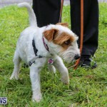SPCA Paws To The Park Bermuda, March 1 2015-69