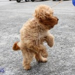 SPCA Paws To The Park Bermuda, March 1 2015-7