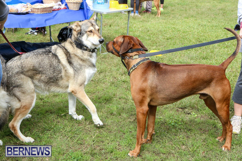 SPCA-Paws-To-The-Park-Bermuda-March-1-2015-70