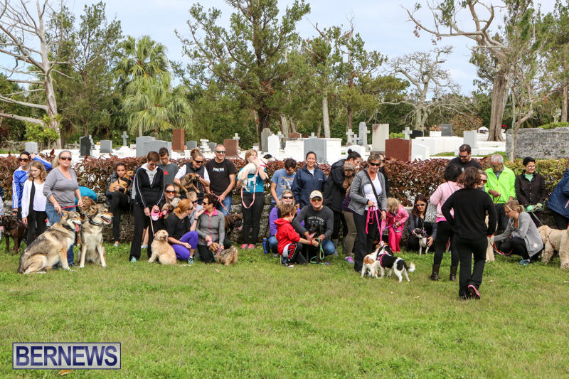 SPCA-Paws-To-The-Park-Bermuda-March-1-2015-78