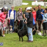 SPCA Paws To The Park Bermuda, March 1 2015-81