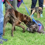 SPCA Paws To The Park Bermuda, March 1 2015-90