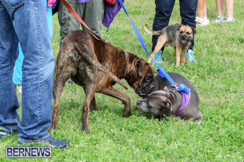 SPCA-Paws-To-The-Park-Bermuda-March-1-2015-90