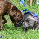 SPCA Paws To The Park Bermuda, March 1 2015-91