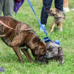 SPCA Paws To The Park Bermuda, March 1 2015-92