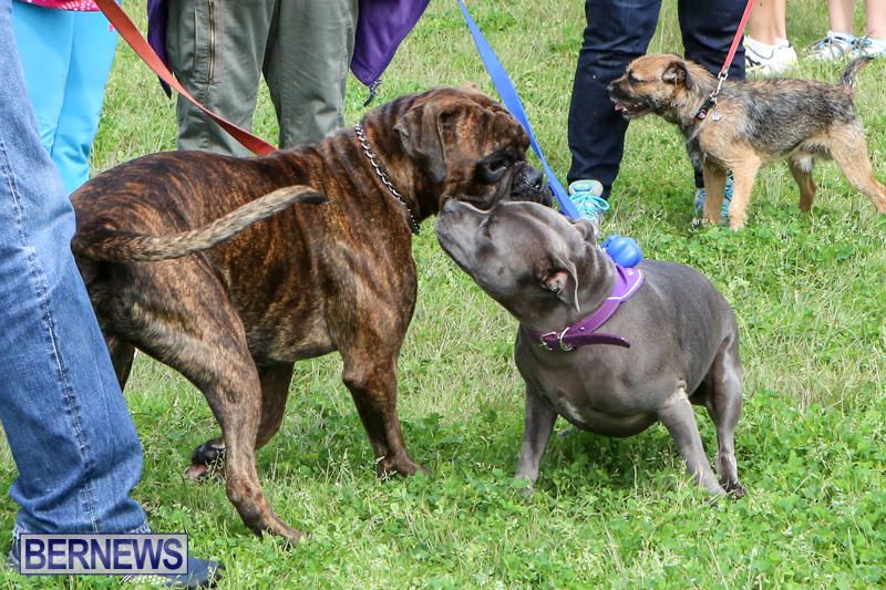 SPCA-Paws-To-The-Park-Bermuda-March-1-2015-93