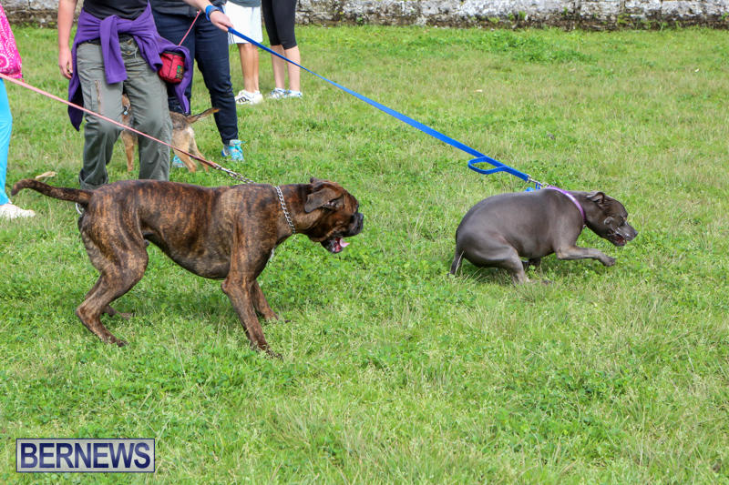 SPCA-Paws-To-The-Park-Bermuda-March-1-2015-94