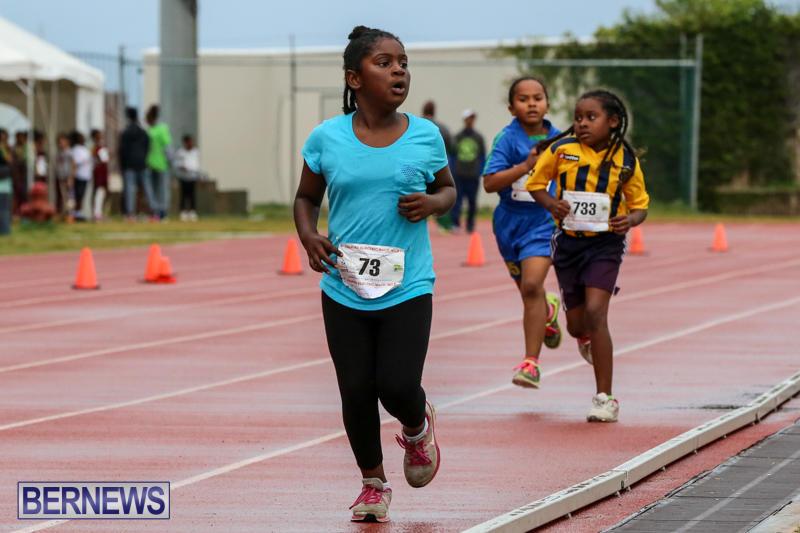Telford-Magic-Mile-Bermuda-February-28-2015-53