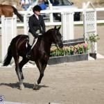 equestrian 2015 Feb 2 (11)