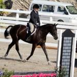 equestrian 2015 Feb 2 (14)