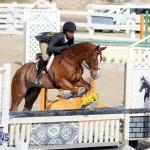 equestrian 2015 Feb 2 (15)