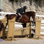 equestrian 2015 Feb 2 (21)