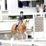 equestrian 2015 Feb 2 (4)