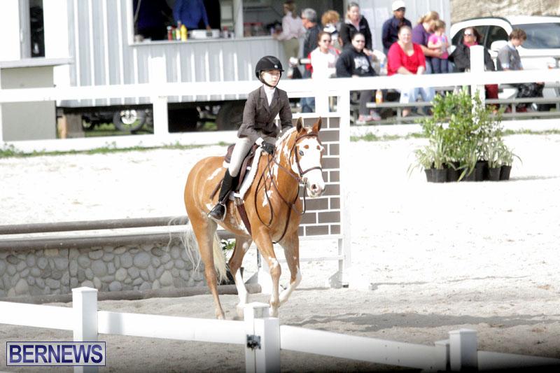 equestrian-2015-Feb-2-5