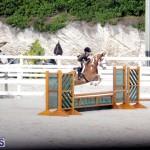 equestrian 2015 Feb 2 (6)