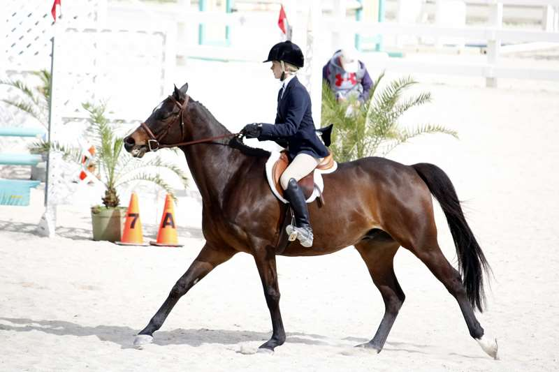 BHPA-Spring-Horse-Jumping-Mar-19-19