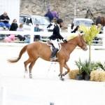 BHPA Spring Horse Jumping Mar 19 (6)
