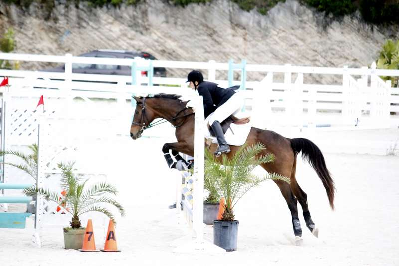 BHPA-Spring-Horse-Jumping-Mar-19-9
