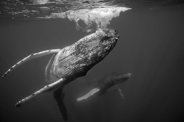 Dancing Whales #6_1