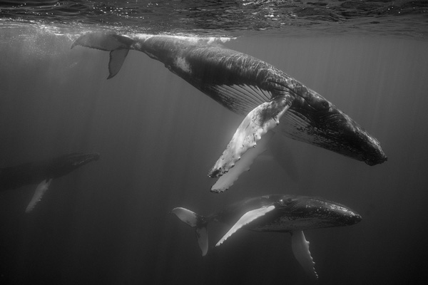 Dancing Whales #7_1