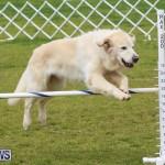 Dog Agility Trials Bermuda, March 28 2015-1