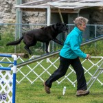 Dog Agility Trials Bermuda, March 28 2015-100