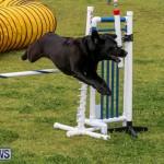 Dog Agility Trials Bermuda, March 28 2015-107