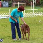 Dog Agility Trials Bermuda, March 28 2015-108