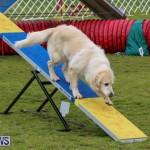 Dog Agility Trials Bermuda, March 28 2015-11