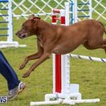Dog Agility Trials Bermuda, March 28 2015-113