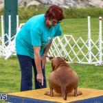 Dog Agility Trials Bermuda, March 28 2015-119
