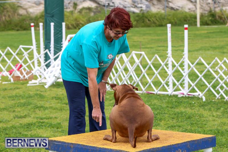 Dog-Agility-Trials-Bermuda-March-28-2015-119